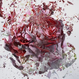 Martin Klimas' Rapid Bloom. Image from My Modern Met.